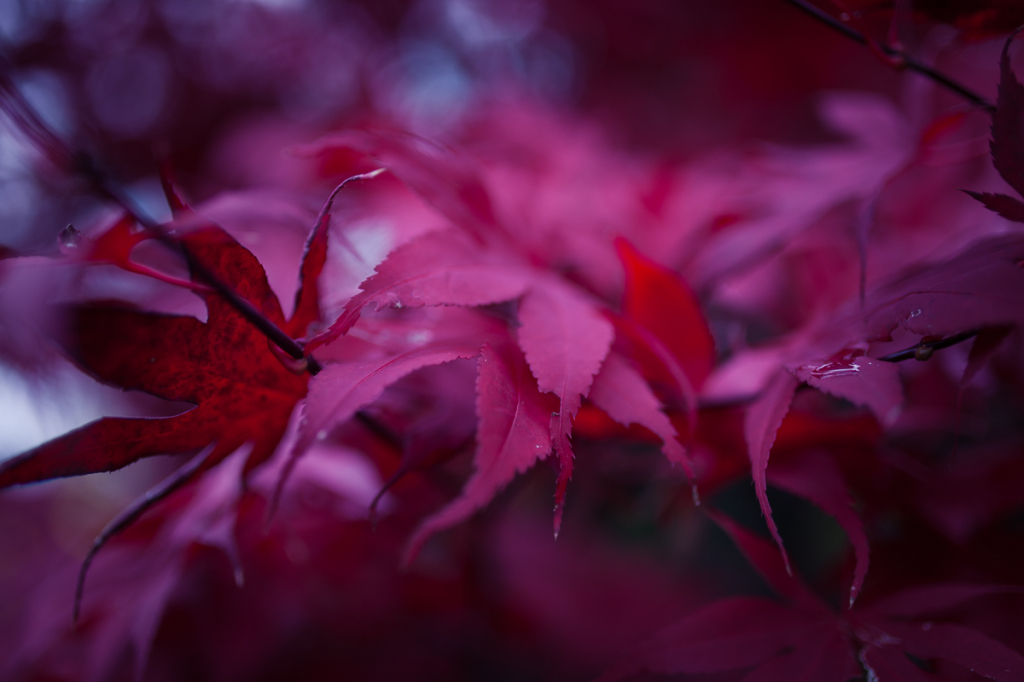 20141115-_MG_0585